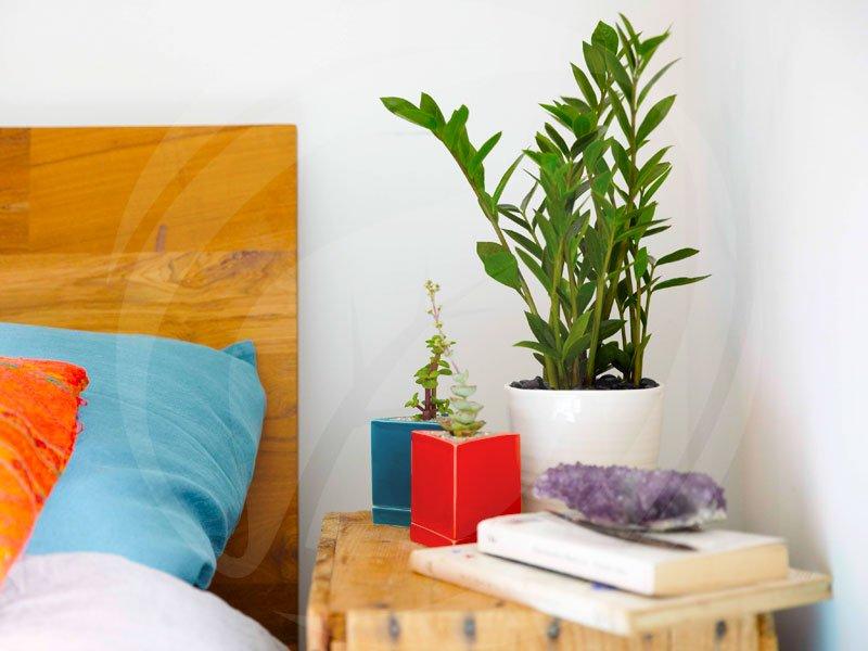 Yêu cầu đối với cây cây nội thất hợp phong thủy